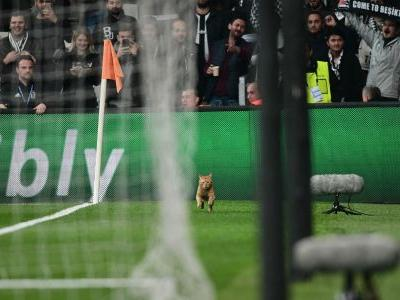 Besiktas charged over man of the match performance from pitch-invading cat