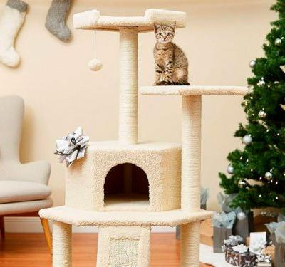 Chewy Cyber Monday sales include deals of up to 60% off pet food, dog toys and gear, cat trees, and more
