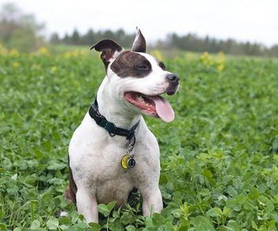 Breed-Specific Legislation - What All Dog Owners Need to Know