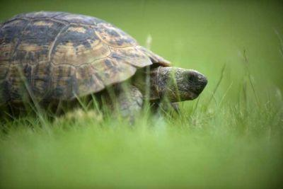 Tortoise Purchased By Twins 50 Years Ago May Be Oldest Pet In Scotland