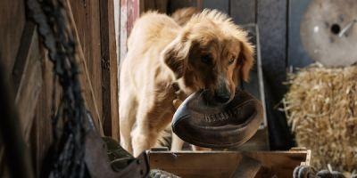 A Dog's Purpose Producers Respond To Controversy Over German Shepherd