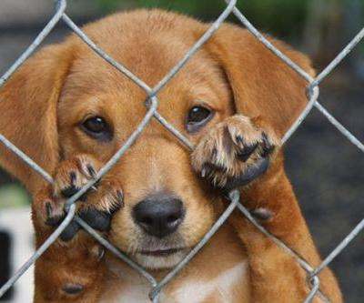 Socializing Neglected Dogs: What Goes on Behind the Scenes to Make a Mistreated Dog Adoptable