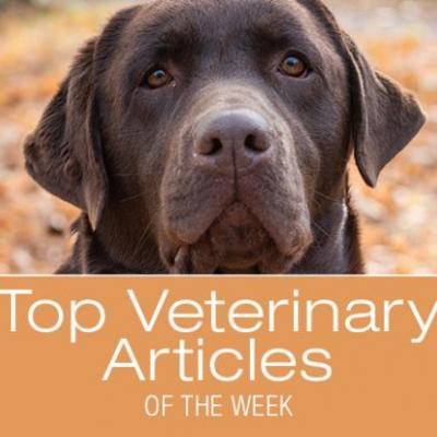 Top Veterinary Articles of the Week: Rectal Prolapse, Fall Toxins, and more