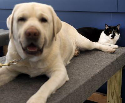 Cat named D-O-G is the star of this dog training facility