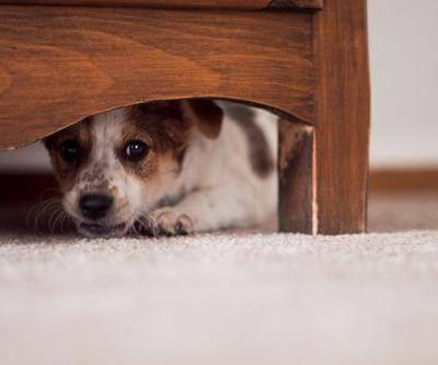 Do You Have Scared Puppy? What to Look For - and How to Help Him