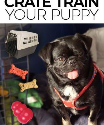 How and Why to Crate Train Your Puppy