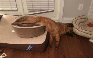 Nap-Loving Pup Stacks All His Dog Beds Into One Giant Pile Of Luxury