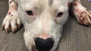 Dog Survives Harrowing Journey After Being Dragged By Truck