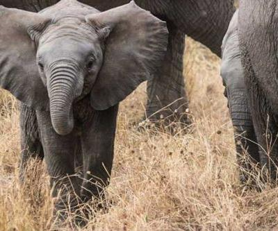 Adventures in South Africa's Zululand