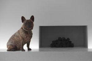 3 Signs Your French Bulldog is Overweight