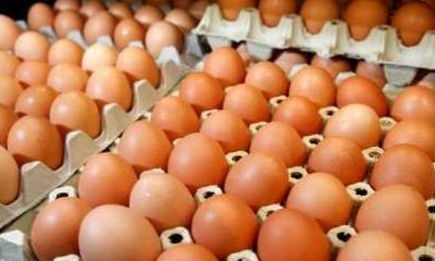 Why you should NOT keep eggs in fridge, know here