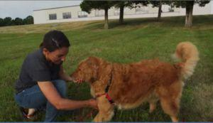 Want To Train Your Dog To Come When Called? We're Here To Show You How