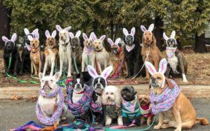"""N.Y. Dog Walkers Take The Most Epic """"Pack"""" Photos"""