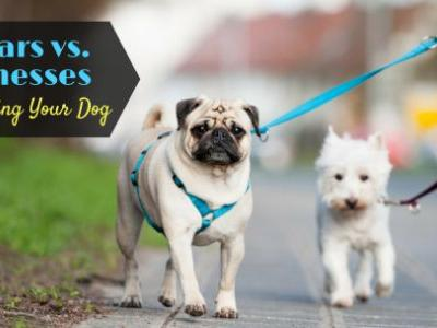 Collars vs. Harnesses For Walking Your Dog
