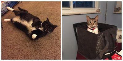 Jasmine and Iris: Animal Friends' Home to Home Adoption Program