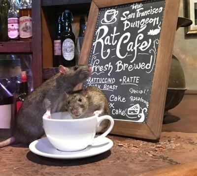 Rodents To Get Seat At The Table In San Francisco Rat Cafe