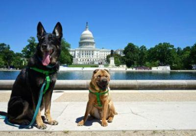 Washington, D.C.'s Top Pet Friendly Attraction: The National Mall