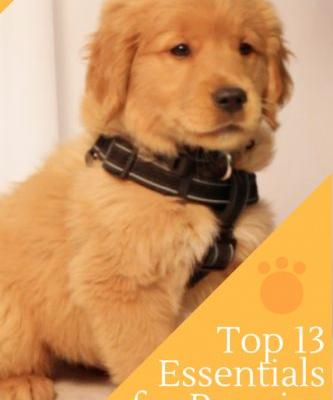 Top 13 Things You Need for a New Puppy