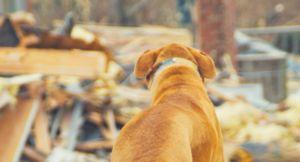 Returning Home After a Storm - How to Keep Your Pets Safe