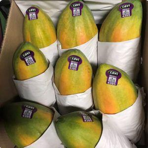 Agroson's LLC refuses FDA request to voluntary recall of Cavi brand papayas