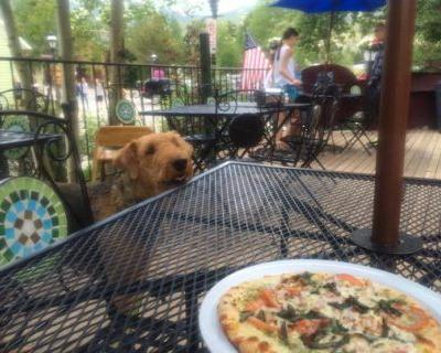 Inside Scoop: Dog Friendly Restaurants in Chicago