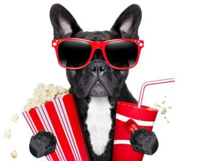 Take Your Dog To The Movies: Drive-in Movie Theaters Across the U.S. & Canada