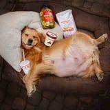 This Pregnant Golden Retriever Knows What's Up: Pickles, Ice Cream, and In-N-Out, Please!
