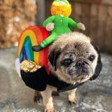 Pug Paradise Exists, and It's Filled With Wrinkly Old Pugs in Costumes