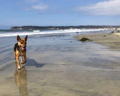 Top Dog Beaches in San Diego