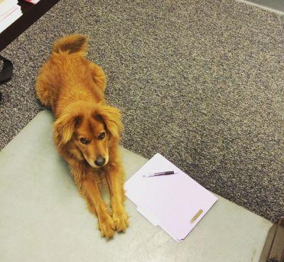 19 Dogs Who Are Taking Over The Office For 'Take Your Dog To Work Day'
