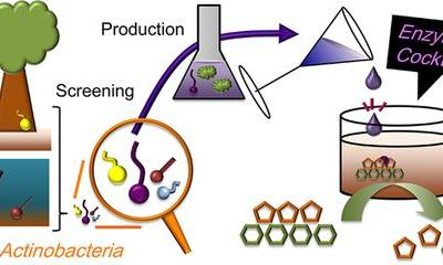 Efficient and Supplementary Enzyme Cocktail from Actinobacteria and Plant Biomass Induction