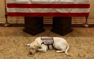 Former President's Service Dog Moves On To New Assignment Now That His Mission Is Complete