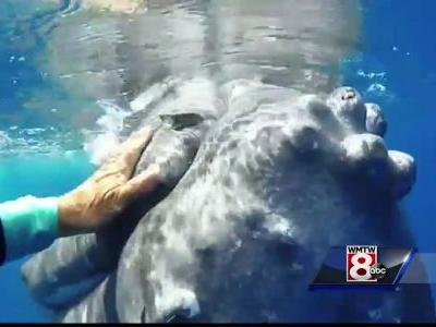 Maine researcher says whale may have saved her life