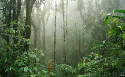 Wonders of Costa Rica Special - Cloud Forest, Adventure, & Beach