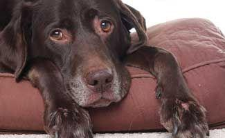 How To Treat A Poisoned Dog