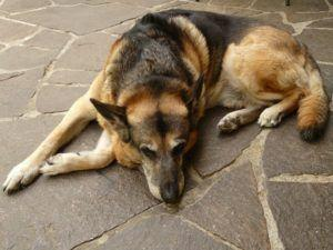 What Are Skin Ulcers In Dogs?