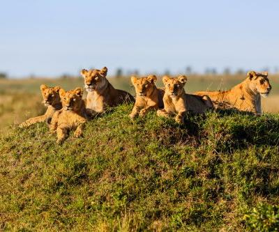 When's the best time to see wildlife in the Masai Mara?