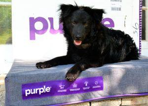 Tiki + Barli Try the Purple® Pet Bed