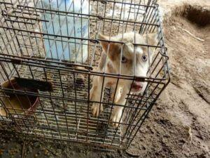 26 Dogs Freed From The Dog Meat Trade In China