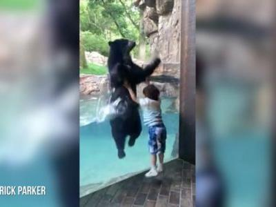 Must see: Bear plays adorable game of copycat with boy at zoo