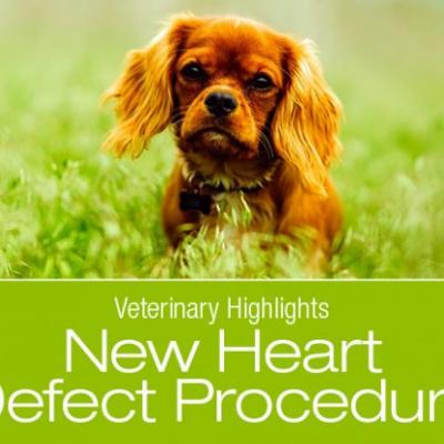 Veterinary Highlights: New Procedure to Fix A Rare Heart Defect in Dogs?
