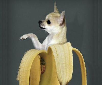 Can Dogs Eat Bananas? Let's Talk About Bananas for Dogs
