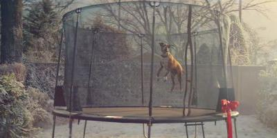 Why BustertheBoxer makes this the best John Lewis Advert ever