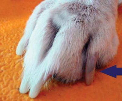 How to Trim Dog Nails - Safely