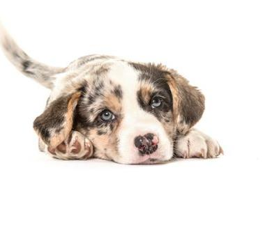 When Do Dogs Stop Growing?