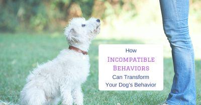 How Incompatible Behaviors Can Transform Your Dog's Behavior