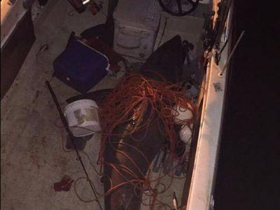 A 10-foot great white shark jumped right into a fisherman's boat in Australia