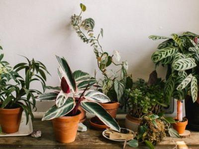 The One Room You're Not Putting Plants In - But Should Be