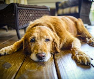 Would You Donate Your Dog's Body to a Vet Education Program?