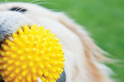 Summer Dog Toys for Pups of All Ages
